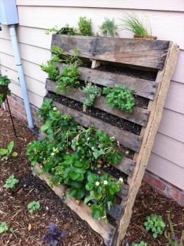 pallet-vertical-garden-4