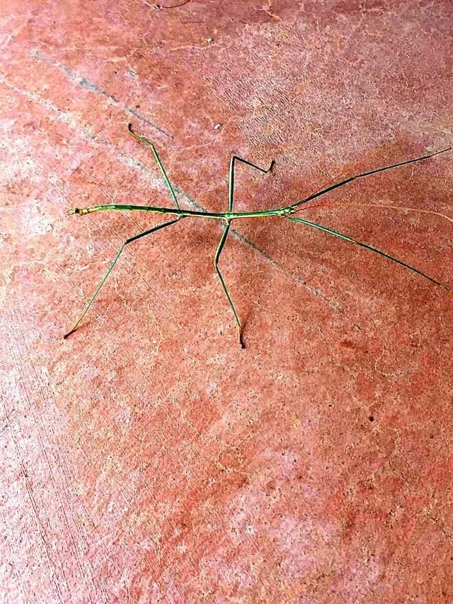 grass bug 1