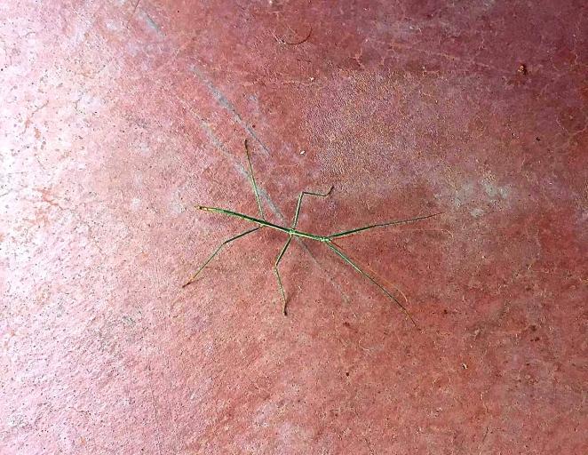 grass bug 2