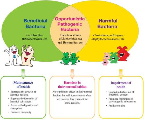bacteria-chart