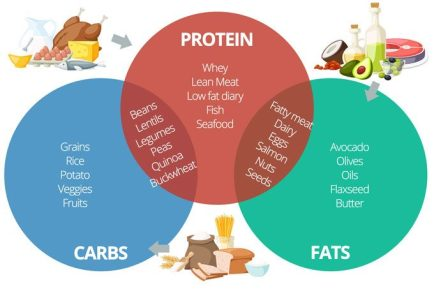 Proteins-carbs-fats