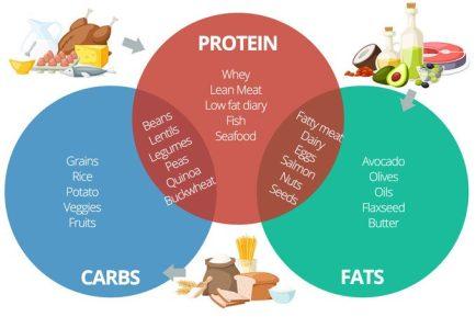 Proteins-carbs-fats